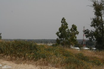 View_from_within_kibbutz_zikim_road